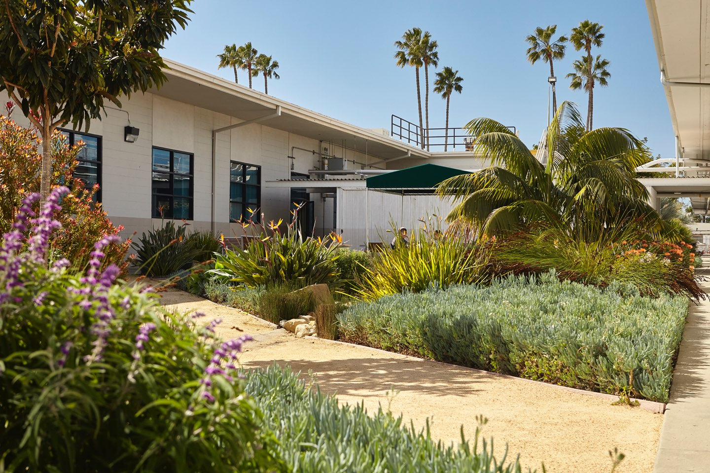 Photo of drought-tolerant landscaping